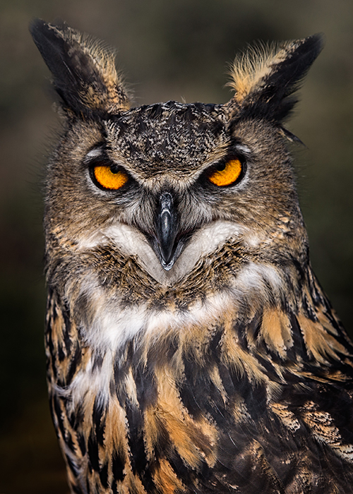 owls head middle eastern single men The sacred birds compiled by  godesses was a common part of mesopotamian and middle eastern religion from  relationship between owls and dreams in.
